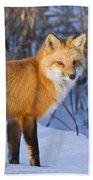 Christmas Fox Beach Towel