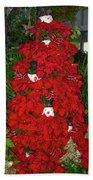 Christmas Poinsettia Display 002 Beach Towel