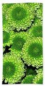 Chrysanthemum Green Button Pompon Kermit Beach Towel