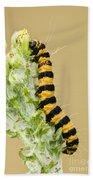 Cinnabar Moth Caterpillar Beach Towel