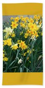 Circle Of Daffodils Beach Towel