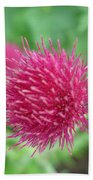 Cirsium Burgandy Thistle Beach Towel