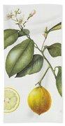 Citrus Bergamot Beach Towel by Margaret Ann Eden