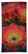 Claret Cup Cactus Flowers  Beach Towel