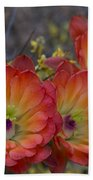 Claret Cup Cactus - Three Of A Kind  Beach Towel