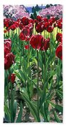 Claret Tulips  Beach Towel