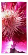 Clematis Bloom.. Beach Towel