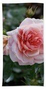 Climber Romantica Tea Rose Beach Towel