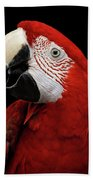 Close-up Funny Portrait Green-winged Macaw, Ara Chloroptera, Isolated Black Background Beach Towel by Sergey Taran