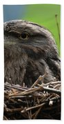 Close Up Look At A Tawny Frogmouth Sitting In A Nest Beach Towel