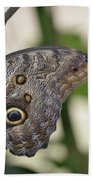 Close Up Of A Pretty Brown Morpho Butterfly  Beach Sheet