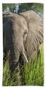 Close-up Of Elephant Behind Bush Facing Camera Beach Towel