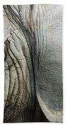 Close Up Of Eye And Ear Of An Elephant Beach Towel