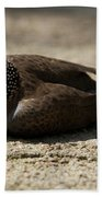 Close-up Of Mottled Pigeon On Sandy Ground Beach Towel