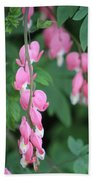 Close Up Of Peacock Pink Bleeding Hearts On Hunter Green Foliage 2 Beach Towel