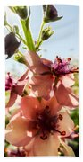 Close-up Of Pink Mullein Flowers Beach Towel