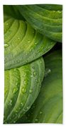 Close-up Of Raindrop On Green Leaves Beach Towel