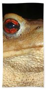 Close Up Portrait Of A Common Toad Beach Towel