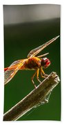 Close Up Red Dragonfly Beach Towel