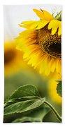 Close Up Single Sunflower In South Dakota Beach Towel