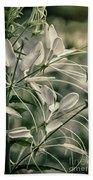 Close Up Wild Flower Beach Towel