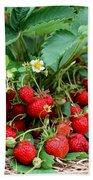 Closeup Of Fresh Organic Strawberries Growing On The Vine Beach Towel