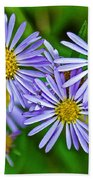 Closeup Of Leafy Bract Asters On Iron Creek Trail In Sawtooth National Wilderness Area-idaho  Beach Towel