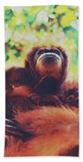 Closeup Portrait Of A Wild Sumatran Adult Female Orangutan Climbing Up The Tree And Holding A Baby Beach Towel