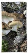 Cluster Of Fungi Beach Towel