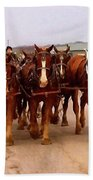 Clydesdale Amish Plow Team Beach Towel