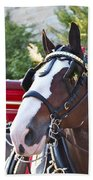 Clydesdale At Esp Beach Towel