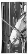 Clydesdale Shine Beach Towel