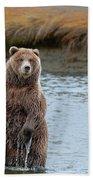 Coastal Brown Bears On Salmon Watch Beach Towel