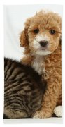 Cockapoo Puppy And Tabby Kitten Beach Towel