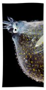 Cockatoo Squid Beach Towel