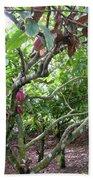 Cocoa Tree With Ripe Cocoa Pods Beach Towel