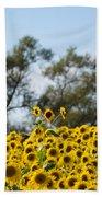 Colby Farms Sunflower Field Newbury Ma Standing Tall Beach Towel