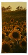 Colby Farms Sunflower Field Newbury Ma Sunset Beach Towel