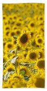 Colby Farms Sunflower Field Newbury Ma Beach Towel