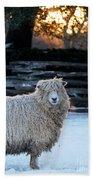 Colonial Sheep In Winter Beach Towel