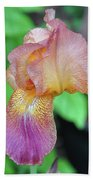 Colored Iris  Beach Towel