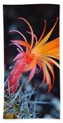 Colorful Cactus Flower Beach Towel