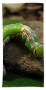 Colorful Caterpillar  Beach Towel