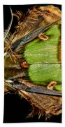 Colorful Cryptic Moth Beach Towel
