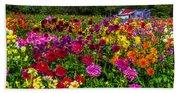 Colorful Dahlias In Garden Beach Towel