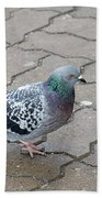 Colorful Dove Beach Towel