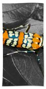 Colorful Insect - Ornate Bella Moth Beach Towel