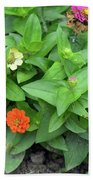 Colorful Pink And Orange Flowers In Green Leaves Bush In The Garden. Beach Towel