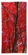 Colorful Red Orange Fall Tree Leaves Art Prints Autumn Beach Towel