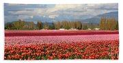 Colorful Skagit Valley Tulip Fields Panorama Beach Towel
